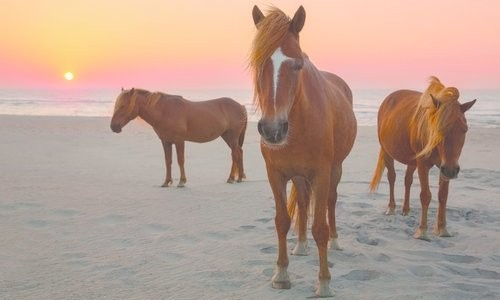 Three horses on the beach at sunset